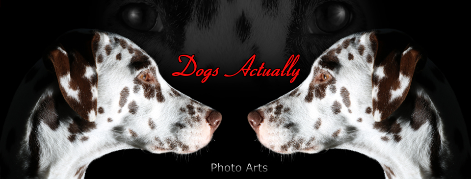 Dogs Actually Photo Arts
